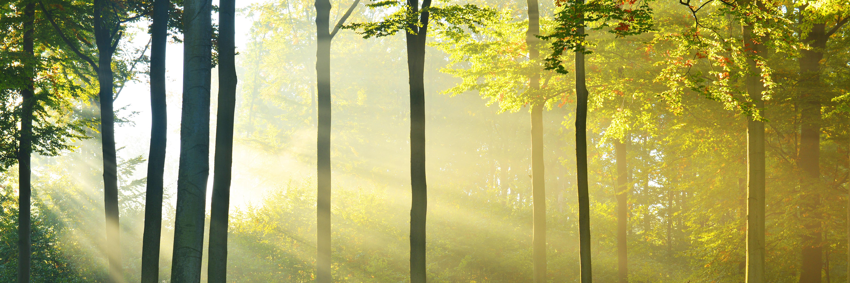Licht scheint durch Bäume